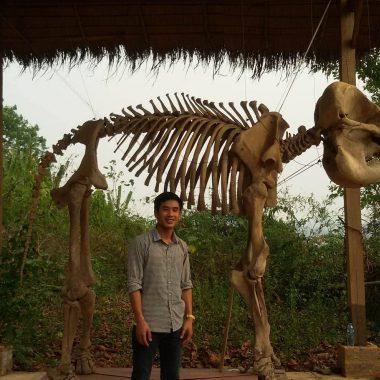 Phet-dinosaur